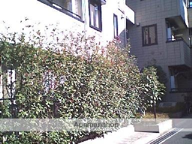 東京都品川区、大崎駅徒歩10分の築17年 3階建の賃貸マンション